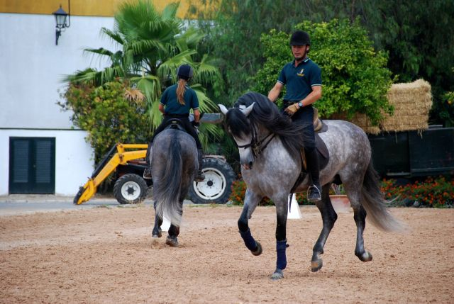 Horses and Riders in Training
