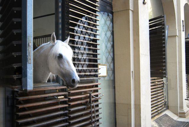 Horse Barn at the Spanish Riding School