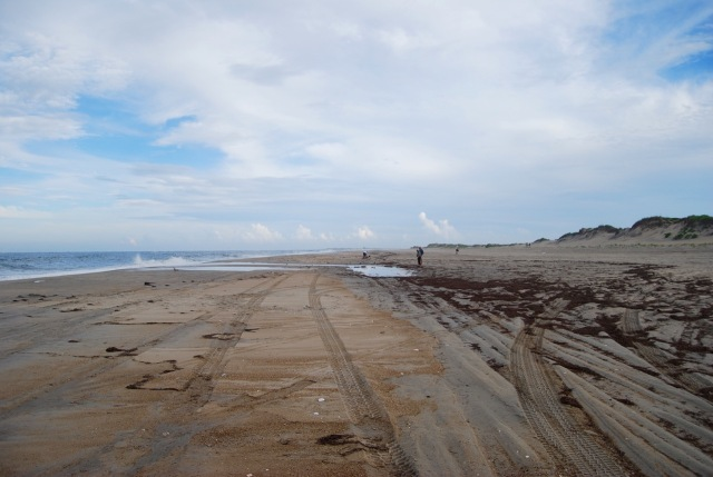 Looking South along the beach