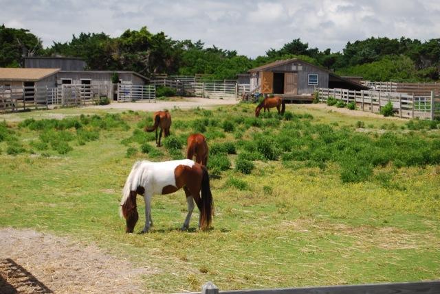 The Wild Horses of Ocracoke