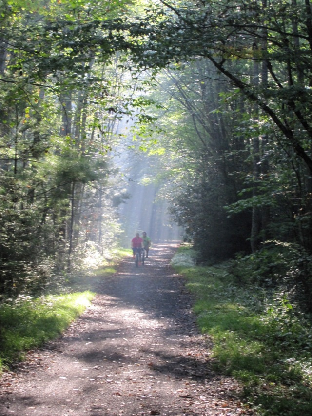 Morning Sun shining through the trees