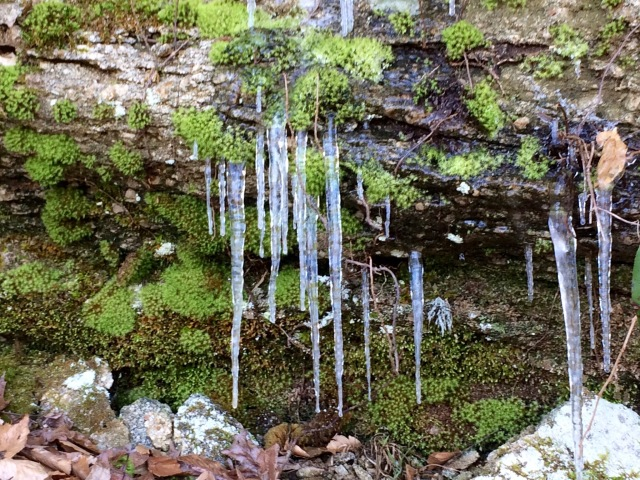 Boone's Cave Icicles