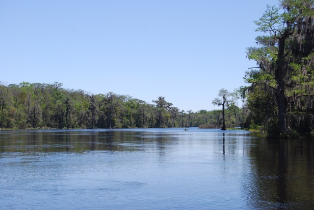 The Wakulla Flowing out of the Springs