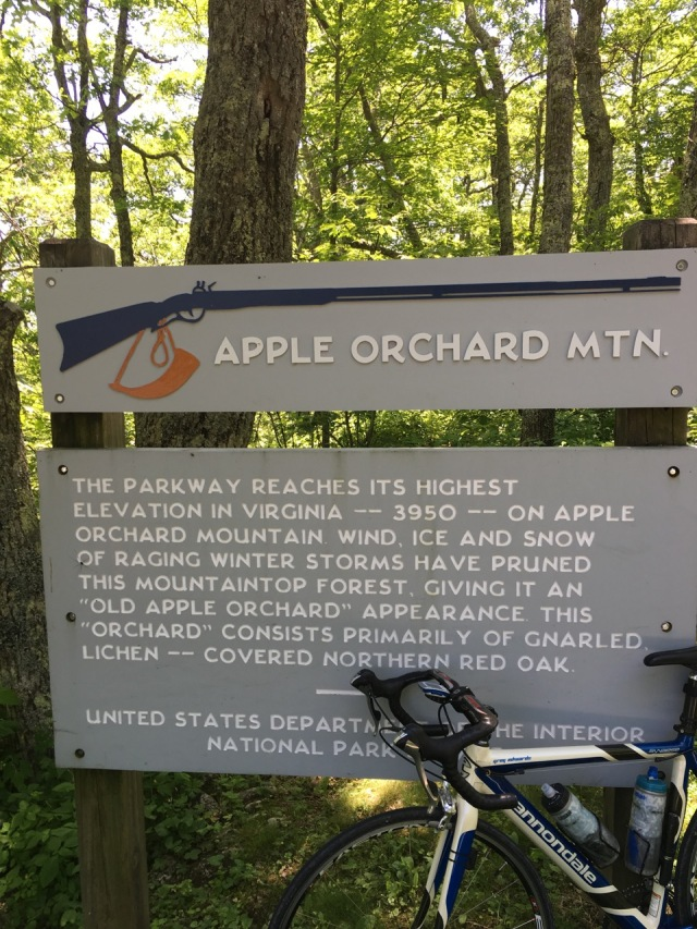 Apple Orchard MT - Summit