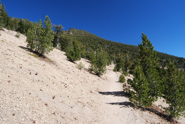 Trail to the Top