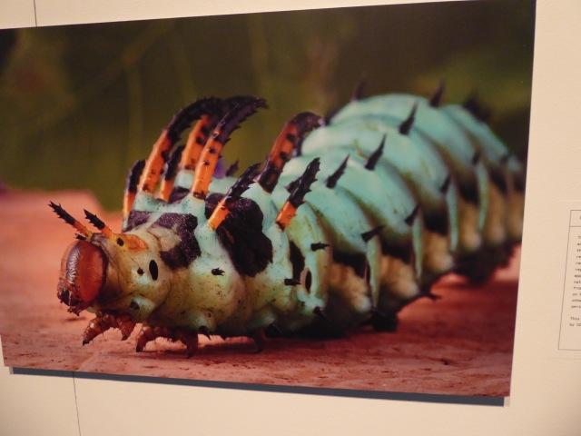 Bug Up Close