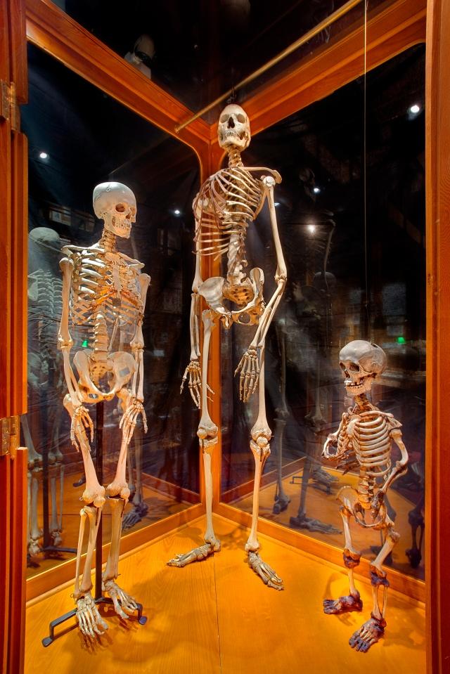 Mutter Museum Philadelphia