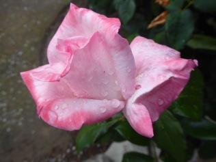 Pink Up Close