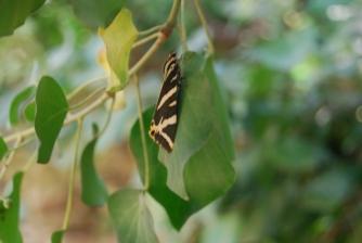 On the Leaf