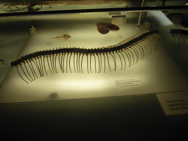 Snake Spine