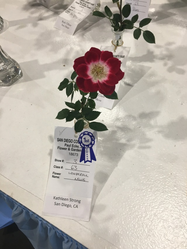 First Place Rose