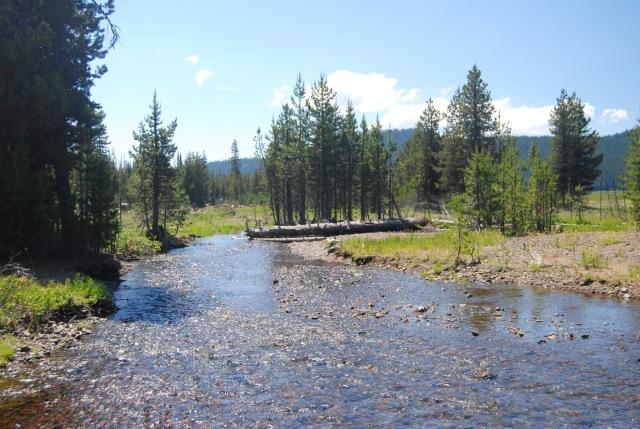 The Fishing Spot