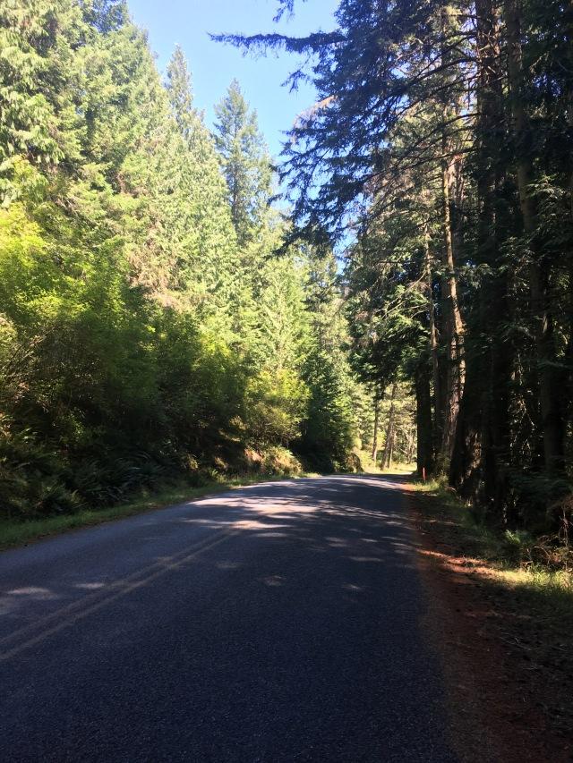 Idyllic Paved Road