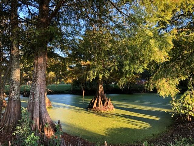 Swamp at Bayou Wilderness Park