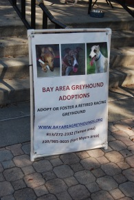 Greyhound Adoptions