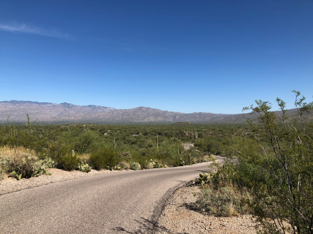 Saguaro Loop Road