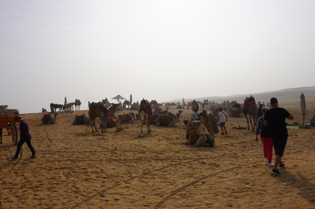 The Camel Concession